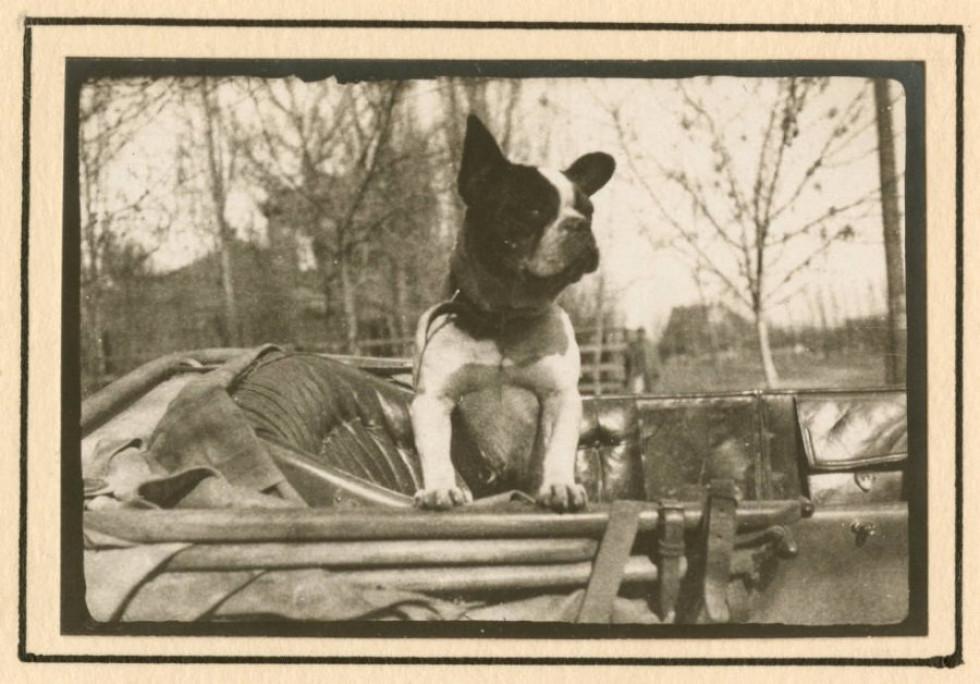Песик Бобі, 1918 р