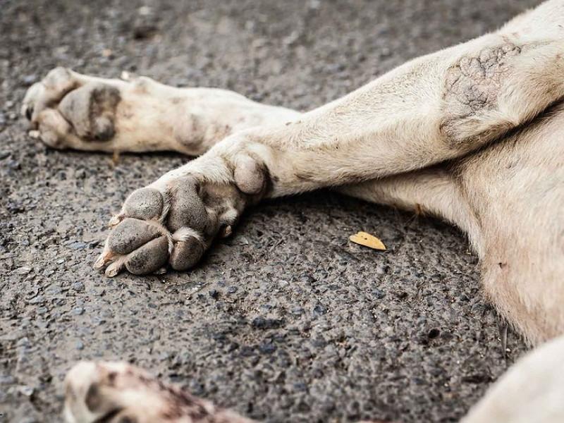 У Любитові водій іномарки роз'їхав собаку / Фото ілюстративне