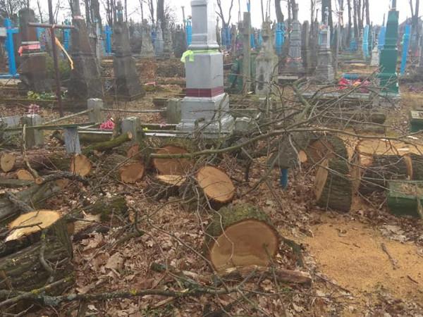 На ковельському кладовищі зрізали 100-літні дуби