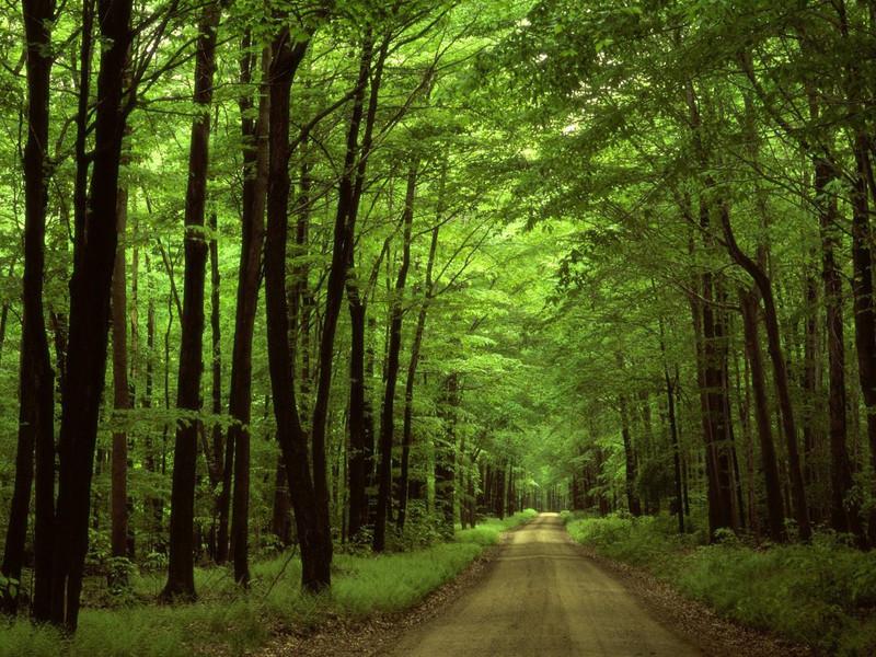 На Ковельщині є 232 гектара «нічийних» лісів  / Фото ілюстративне