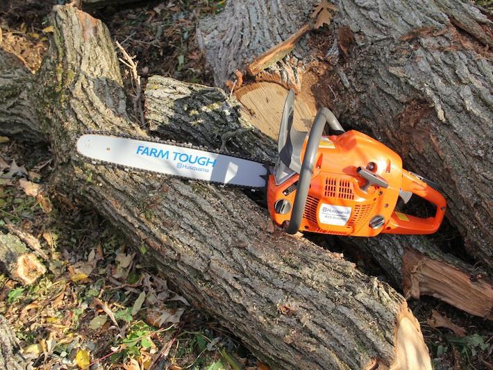 Ковельська мерія дозволила зрізати півсотні дерев / Фото ілюстративне