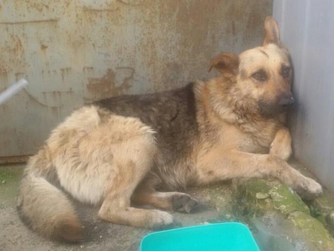 Ковельські зоозахисники заявляють про масові отруєння собак у місті