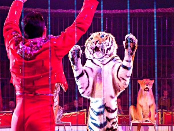 Цирк / Фото ілюстративне