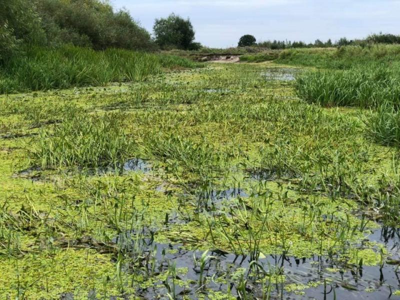 Річка Турія перетворюється у болото