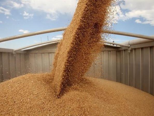 Правила зберігання зерна у сховищі