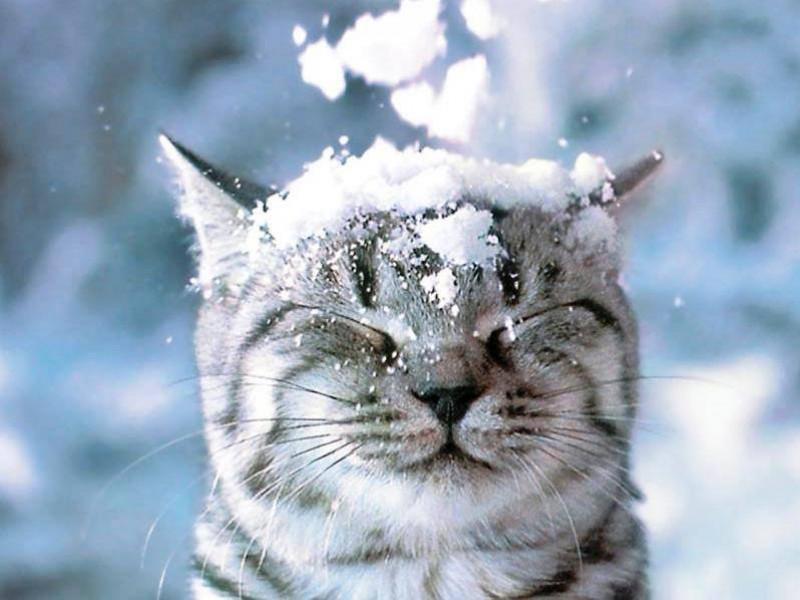 Сніг / Фото ілюстративне
