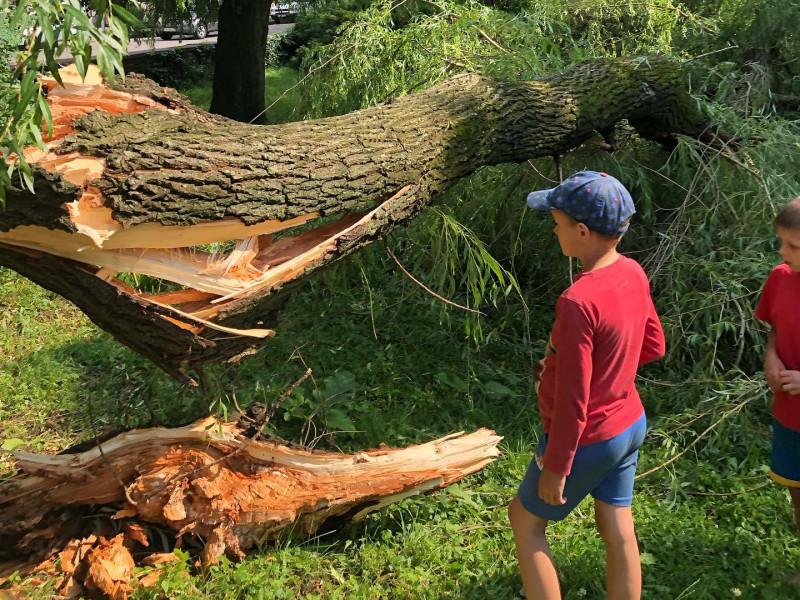 Негода повалила дерево у центрі Ковеля