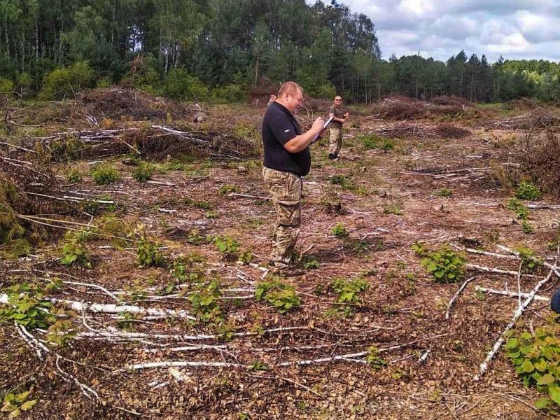 У Ковельському районі невідомі зрізали більше двох тисяч дерев на понад шість мільйонів гривень
