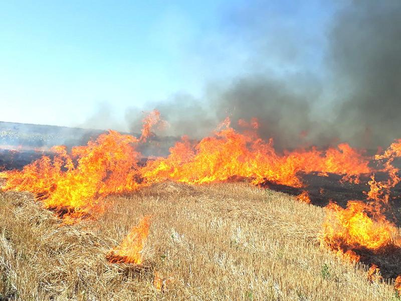 Спалювання сухої рослинності / Фото ілюстративне