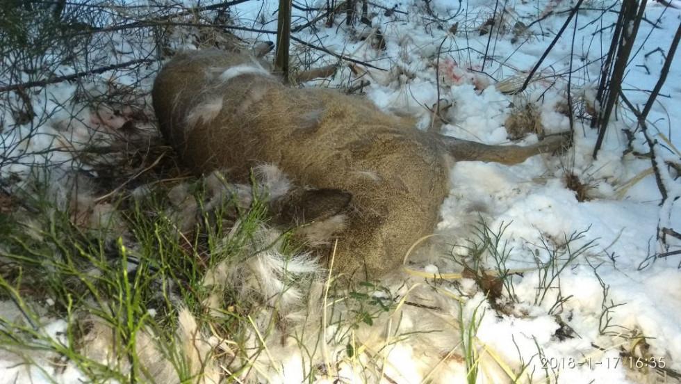 Вбиті козулі
