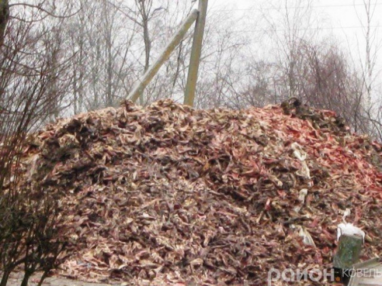Після закриття ветсанзаводу виникли проблеми із захороненням відходів тваринного походження