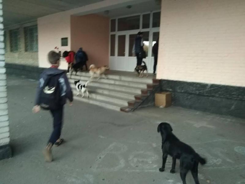 У Ковелі біля школи бігає зграя собак
