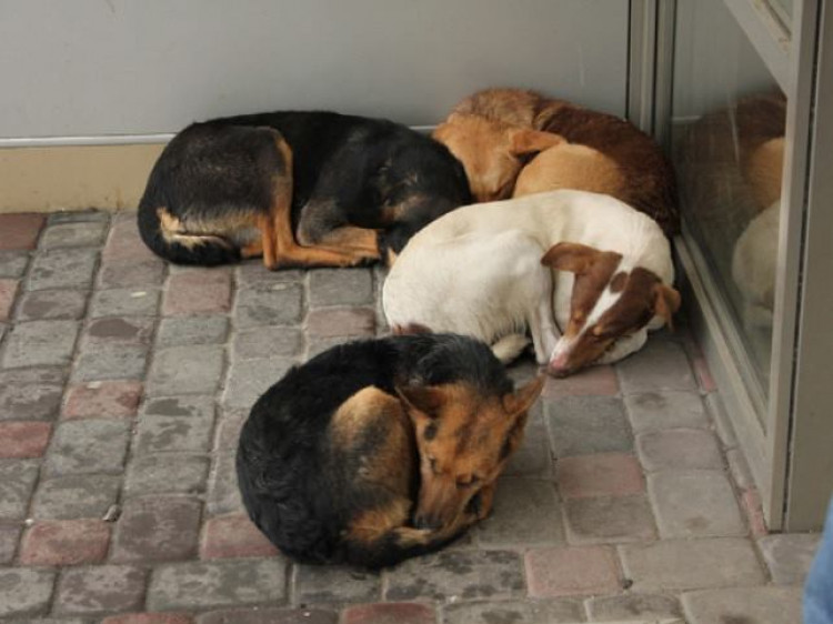 У Ковелі треба створити муніципальний притулок для тварин, – Ігор Пініс