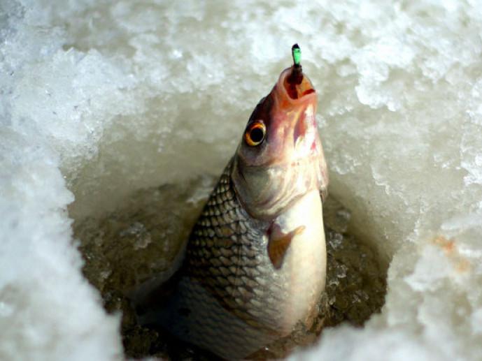 Вилов риби на зимувальних ямах у водоймах Волинської області заборонений