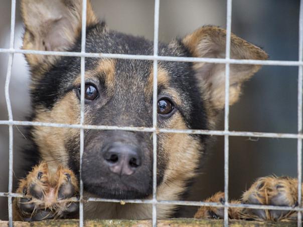Притулок для бездомних тварин хочуть створити у Ковелі