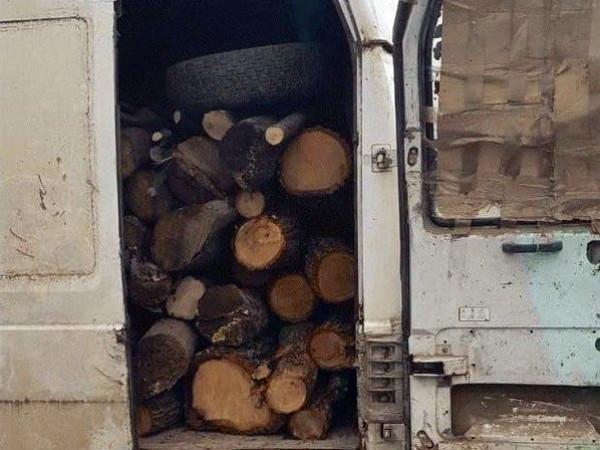 На Ковельщині «застарілі дрова» поліція сприйняла за свіжозрубаний граб / Фото ілюстративне