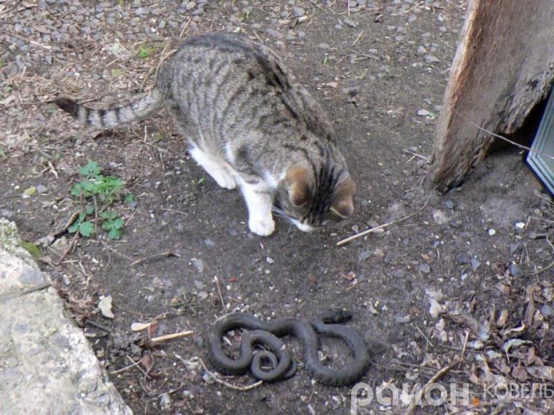 Рятувальники в центрі Ковеля упіймали змію