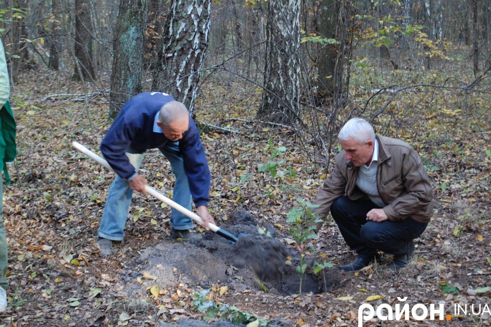 На завершення посадили трьохрічні дубки біля озера Нечимне