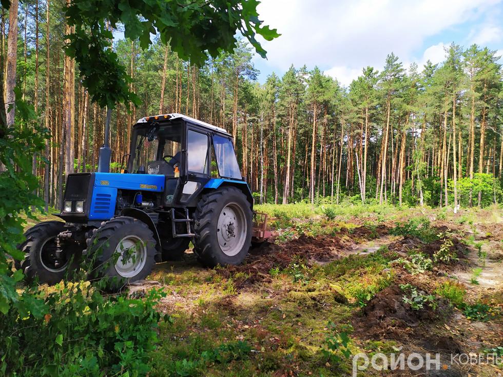 Догляд за молодим лісом